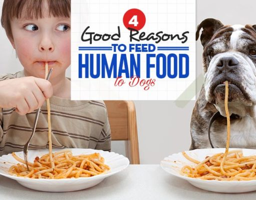 Top 4 Good Reasons to Feed Human Food to Dogs