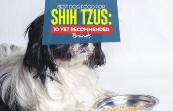 Top Best Dog Food for Shih Tzus