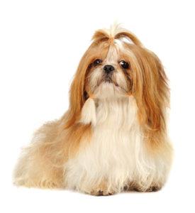 Best Dog Food for Shih Tzus - Top 10 Vet Recommended Brands