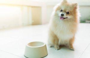 best dog food for pomeranians