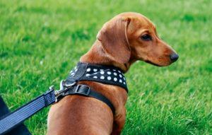 back-clip dog harness