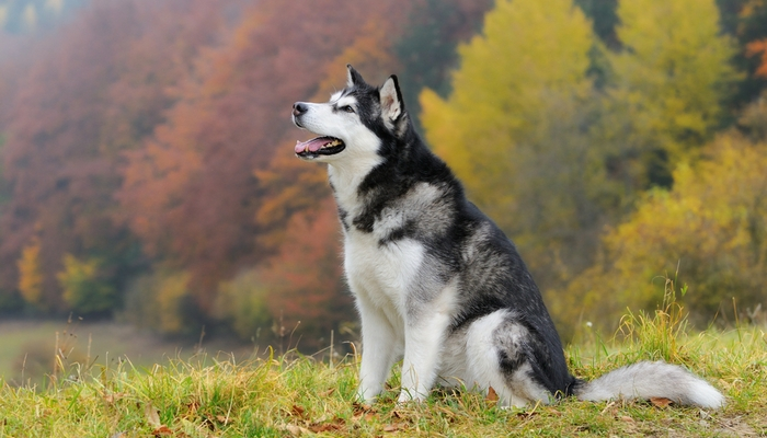 strongest dog breeds