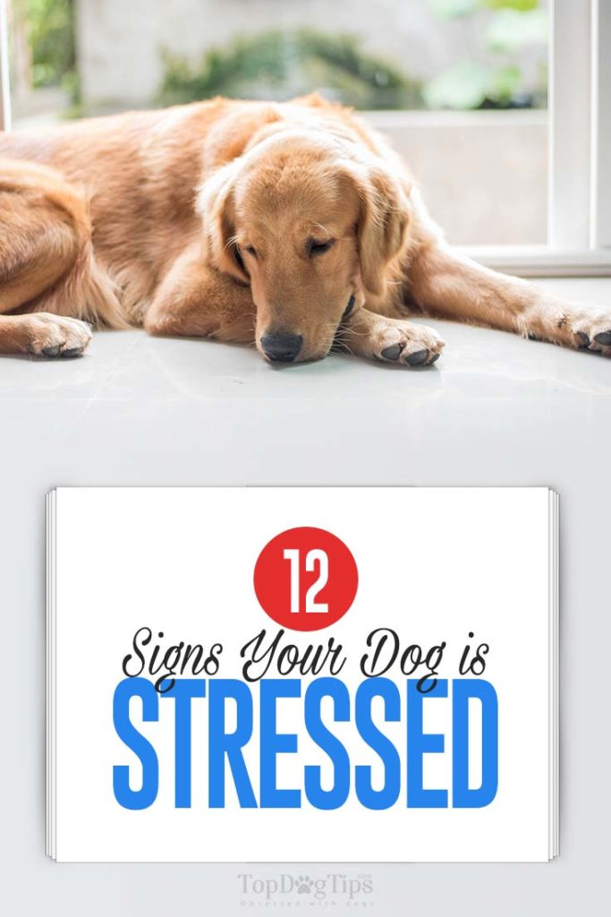 12 Common Signs Your Dog Is Stressed