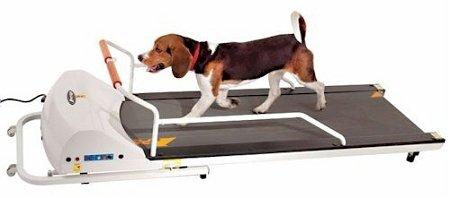 GoPet Petrun pr720f Treadmill
