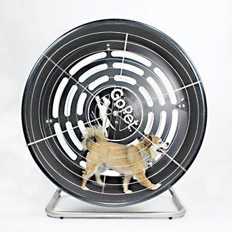 GoPet Treadwheel