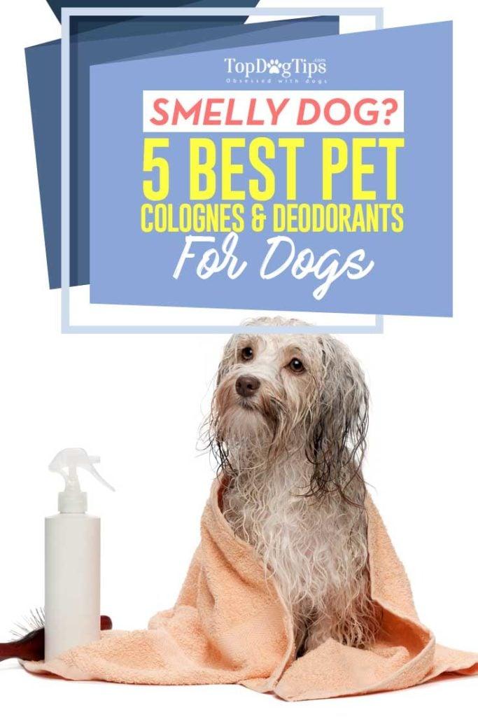 5 Best Dog Cologne Brands