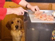 Debunking 8 Common Homemade Dog Food Diet Myths