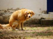 Dog Poop Facts