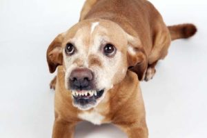 Dog fear aggression and kids safety