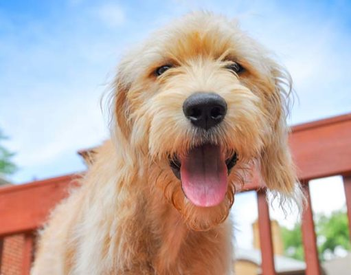 High Cholesterol May Be Good for Dogs with Bone Cancer