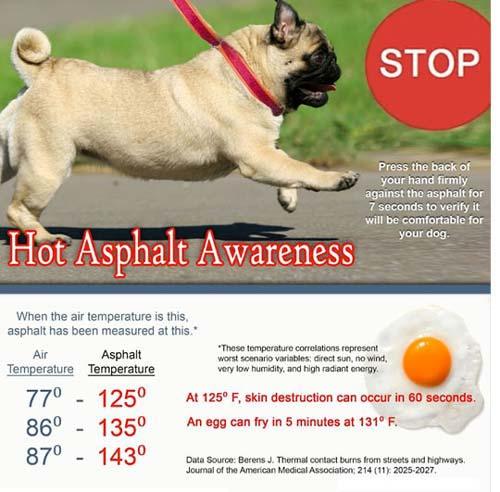 Hot asphalt awareness for dogs