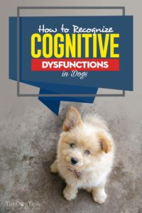 How to Recognize Dogs Cognitive Dysfunctions