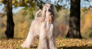 Most Feminine Dog Breeds