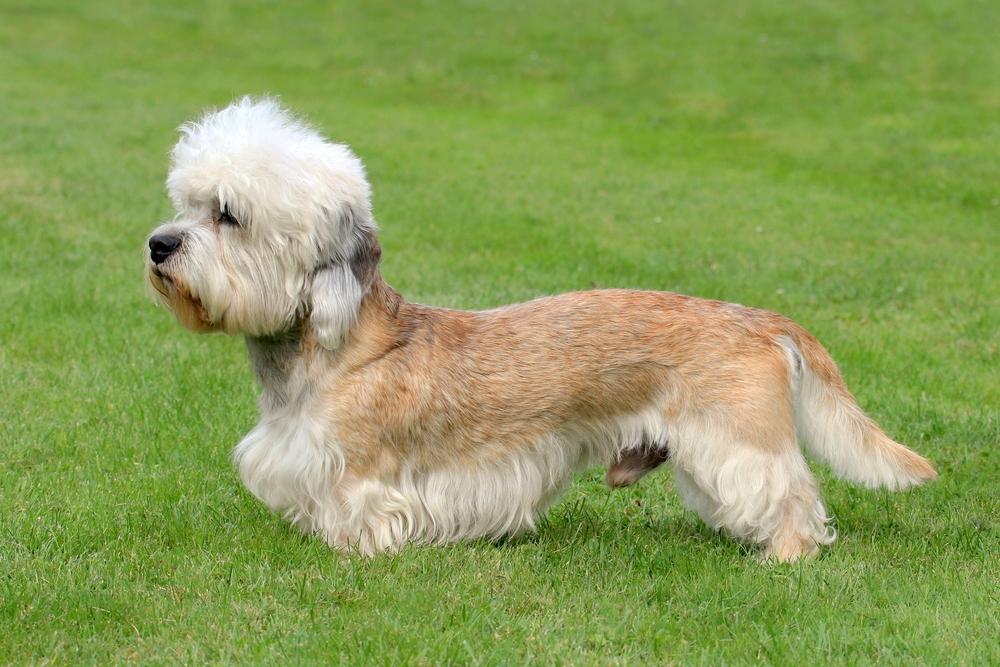 Top Ten Non Shedding Large Dogs