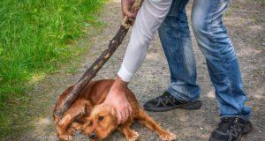 Psychological and Behavioral Indicators of Dog Abuse