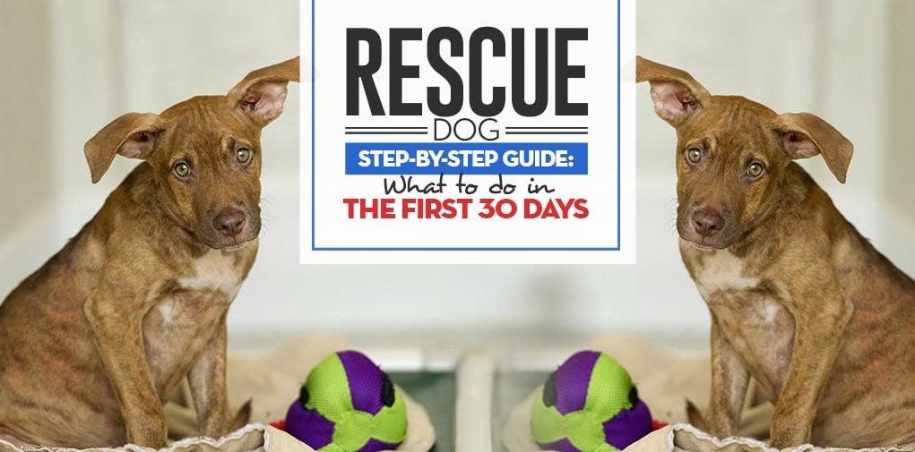 Rescue Dog First 30 Days