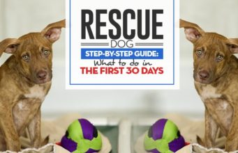 Rescue Dog First 30 Days