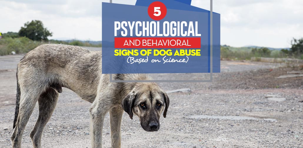 dog abuse essay Beyond the need to recognize and put an end to animal cruelty for the sake of the animal victims involved, also important is the very direct connection between animal cruelty and human violence.