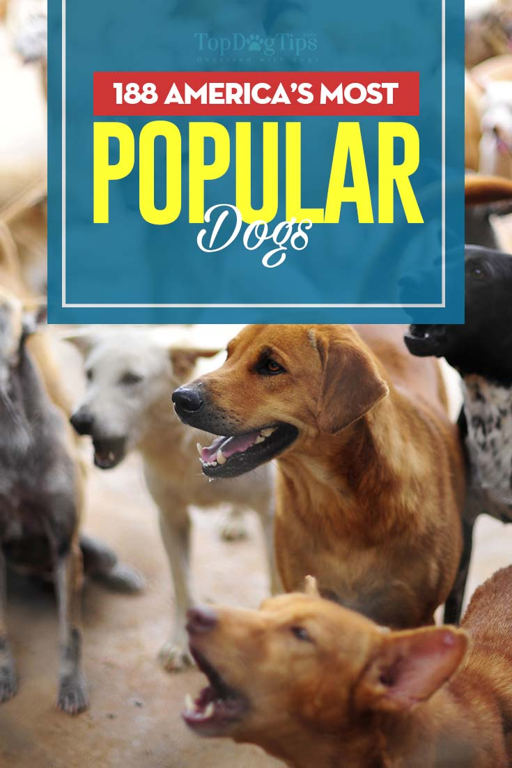 The America's Most Popular Dogs