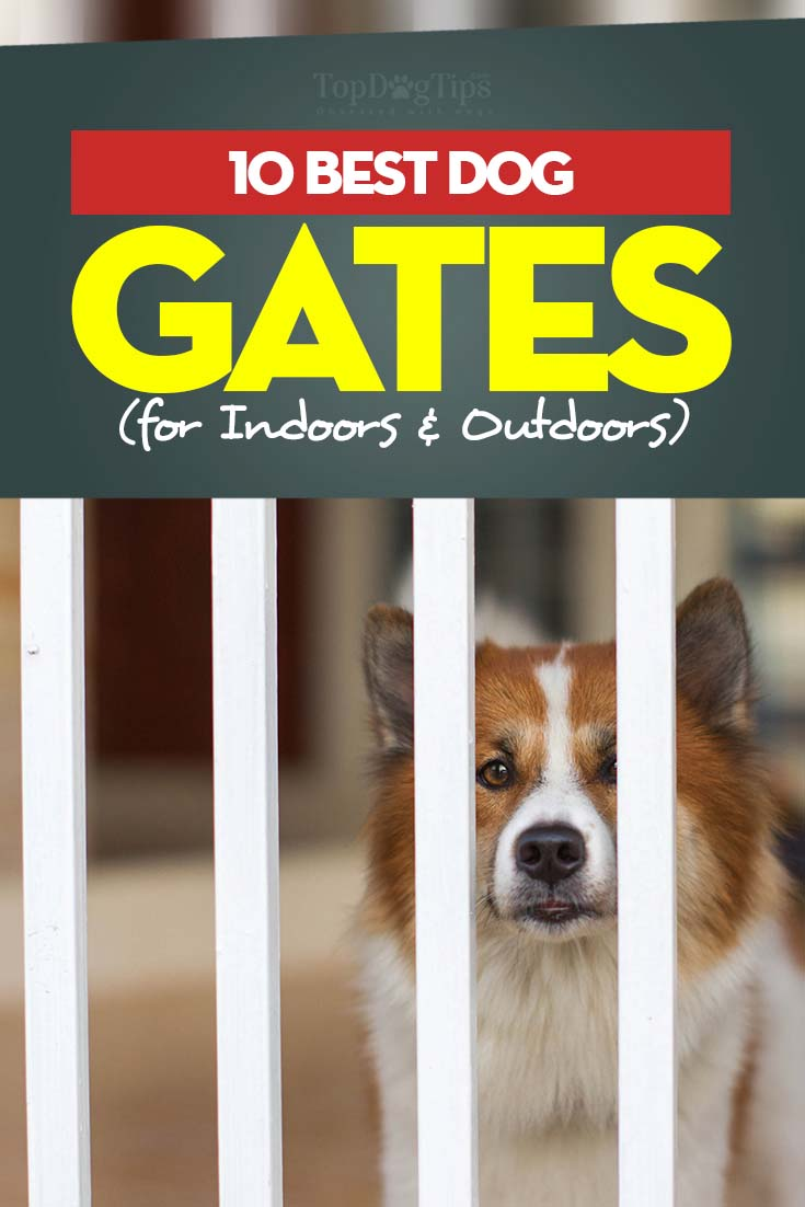 How Should I Choose The Best Dog Gates Indoor?