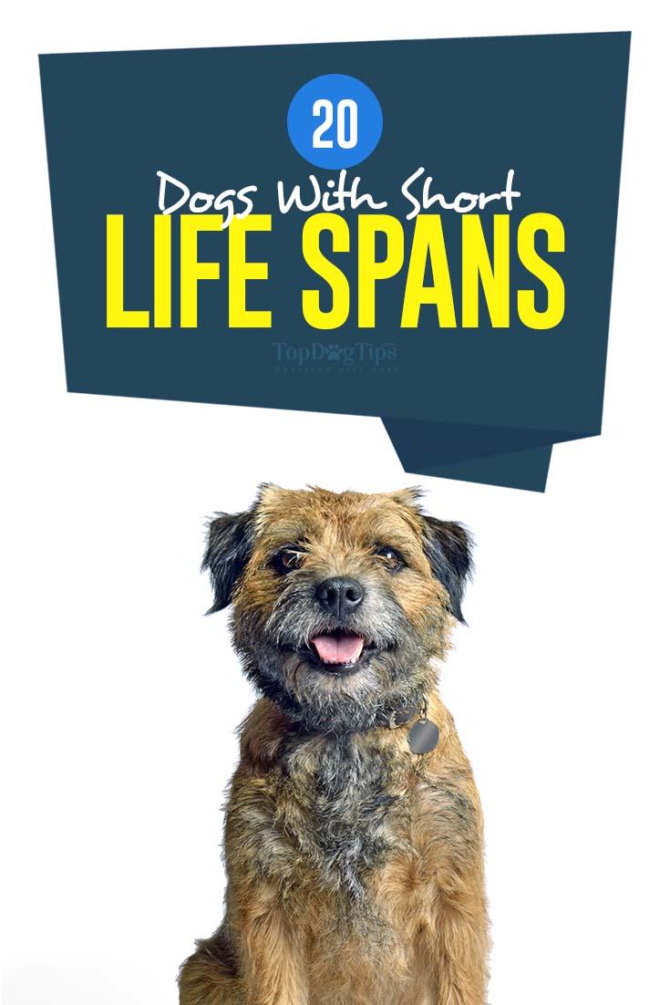 Science on Shortest Lifespan Dog Breeds