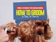 The Guide on How to Groom a Dog