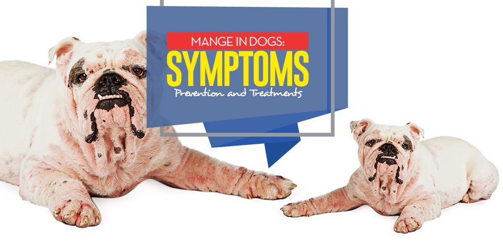 mange in dogs symptoms prevention and treatments