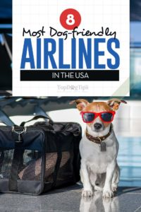 The Most Dog Friendly Airlines