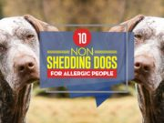 Top 10 Non Shedding Dogs for Allergic People
