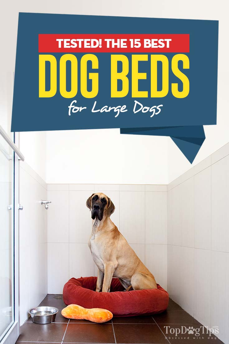 Top 15 Best Dog Beds for Large Dogs