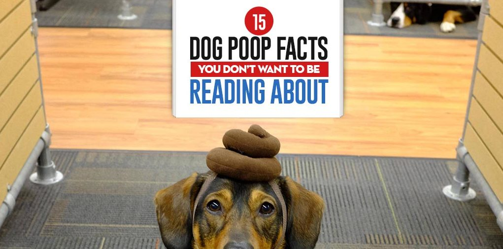 Top 15 Dog Poop Facts You Don't Want To Be Reading About