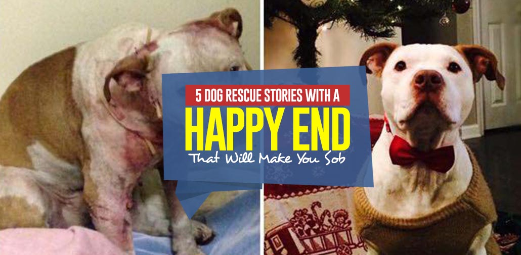 Dog Rescue Stories With A Hy Ending