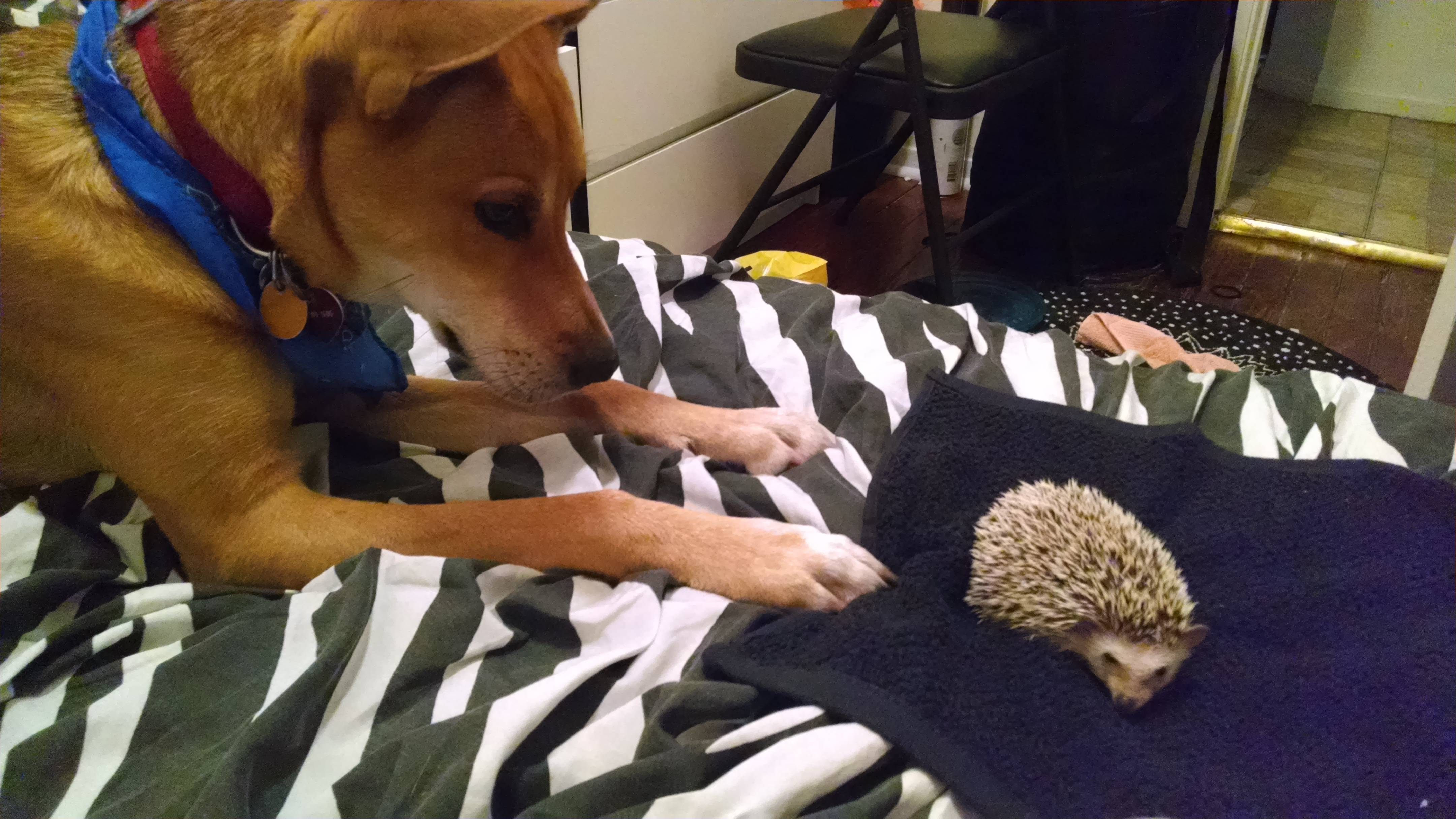 Unlikely Dog Friendships