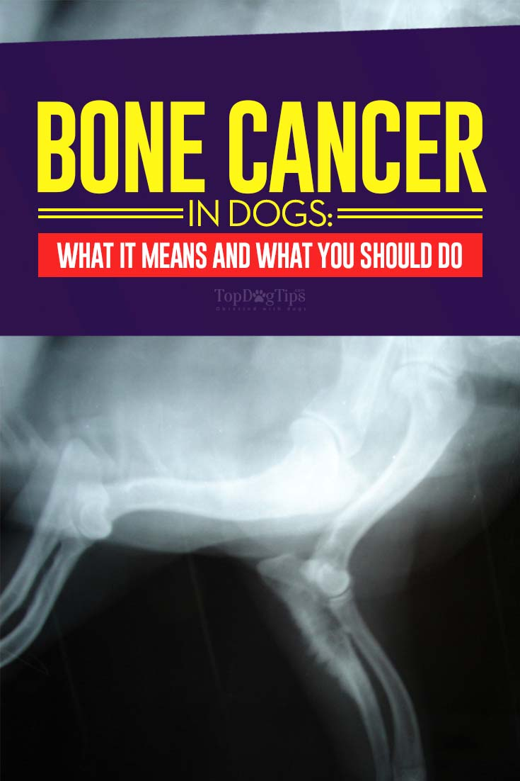 Bone Cancer in Dogs: What It Means for Your Dog and What ...