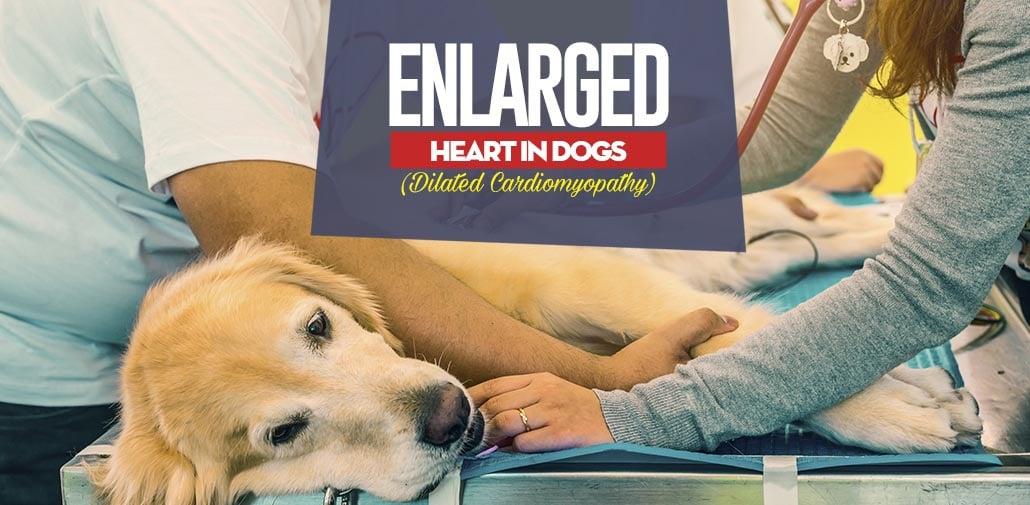 dog enlarged heart natural treatment