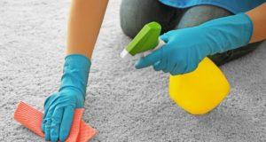 best carpet flea sprays