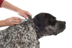 best dog flea drops