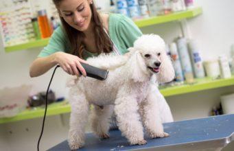 best dog grooming books
