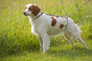 how to choose the right dog leash