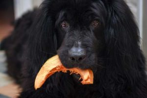 Are pumpkin seeds bad for dogs