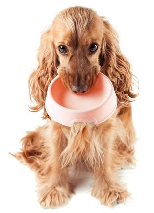 Best Dog Food For Cocker Spaniels