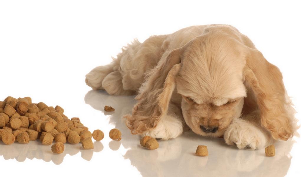 Dog Eating Food Off Floor