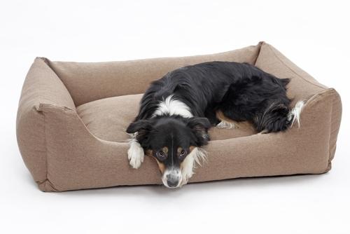 choosing and using orthopedic dog beds