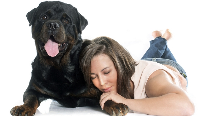 Rottweiler - Best Therapy Dog Breeds