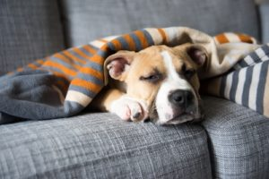 Prognosis for Dogs with Bone Cancer