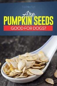Can dogs eat pumpkin seeds?