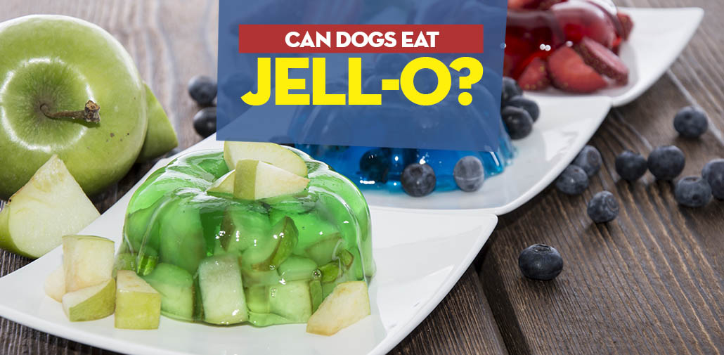 Can Dogs Have Jello? Here Are the Benefits and Side Effects