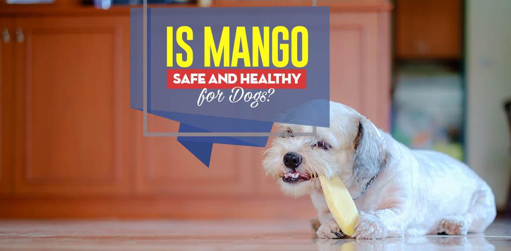 dog and mango