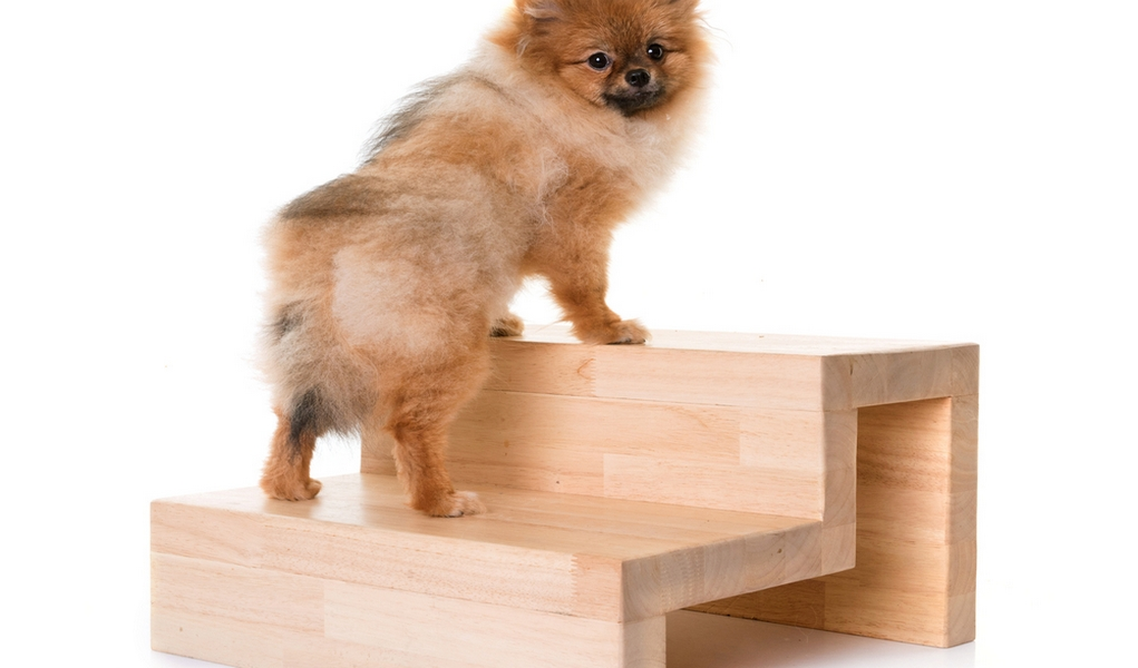 diy dog stairs how to build dog steps for bed car and more