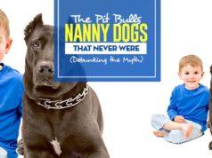 Debunking Pit Bulls Nanny Dogs Myths